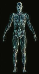 Körper Holakratie Beispiel
