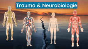 Somatic Experiencing Trauma & Neurobiologie Kreativität