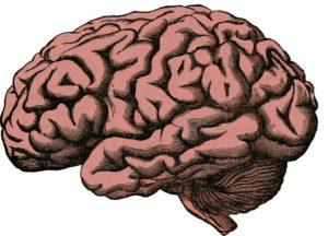Neurobiologie Trauma