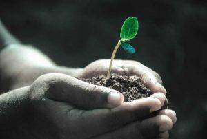 Pflanze Leben Hoffnung